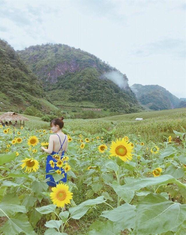 3 Homestay Mộc Châu xinh đẹp như lạc vào những cánh đồng hoa