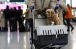 Những quy định khi mang thú cưng lên máy bay cần biết?