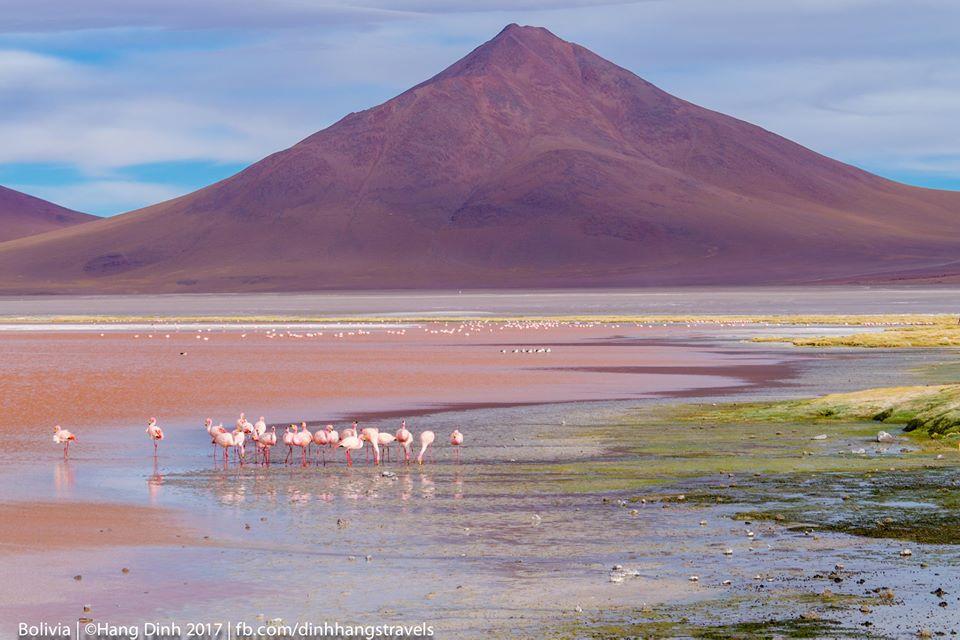 Đẹp đến nghẹt thở chuyến Road Trip Ở Bolivia!